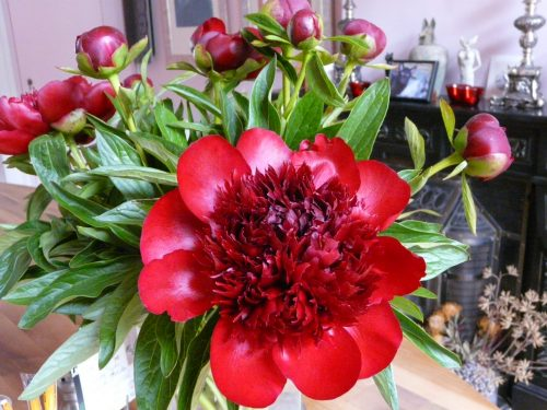 Faye Cossar Peony obsession