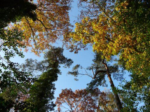 Faye Cossar Autumn trees