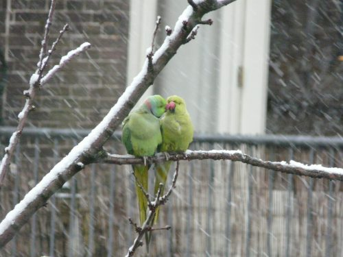 Faye Cossar parakeets trying to keep warm